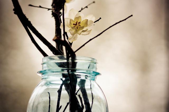 365: 56 Blossom
