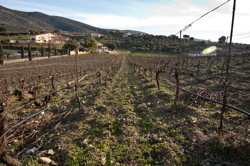 Vinos de Extremadura en Viña Placentina
