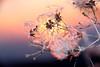"... scaldiamoci ... al sole ("" paolo ammannati "") Tags: flowers sky italy panorama macro me italia tramonto photographer shot top natura cielo tuscany fiori toscana inverno colori riflessi viaggi soe verna rami bosco casentino laverna chiusidellaverna fioritura clematisvitalba paoloammannati albeetramonti flickraward effettinaturali ""flickraward"" mygearandme fotoconneve blinkagain"