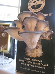 Home grown mushrooms: Three days after sprouting