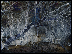 The Blue Tree (Tim Noonan) Tags: blue shadow white snow tree art digital photoshop river branch manipulation negative shining mosca hypothetical artisticphotos vividimagination artdigital shockofthenew sotn stealingshadows sharingart maxfudge awardtree maxfudgeexcellence maxfudgeawardandexcellencegroup selectbestexcellence sbfmasterpiece exoticimage