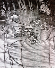 FAR FROM THE MADDING (Norfolkboy1) Tags: england teal ducks linedrawing penink rapidograph reedbed norfolkbroads woodbastwick cockshootbroad notmacho panthonybromage