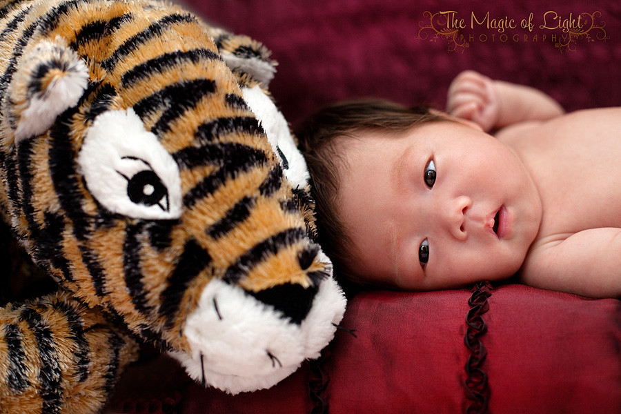 TigerBlog