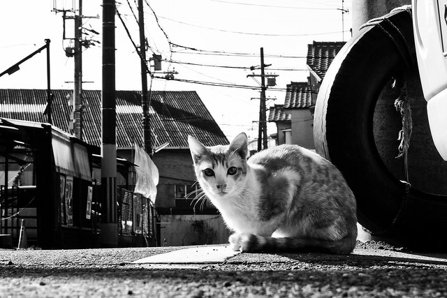 Today's Cat@2011-01-25