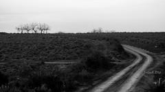 ... la strada la conoscerai percorrendola (FranK.Dip) Tags: italy panorama white black alberi strada italia campagna albero campagne bianco nero salento puglia brindisi orizzonte curva spettacolare silenzo frankdip
