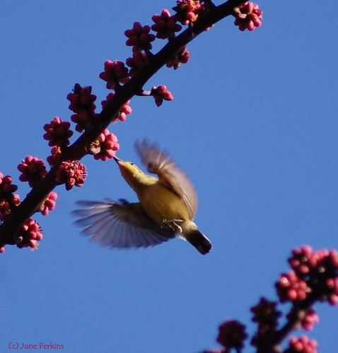 sunbirdsig