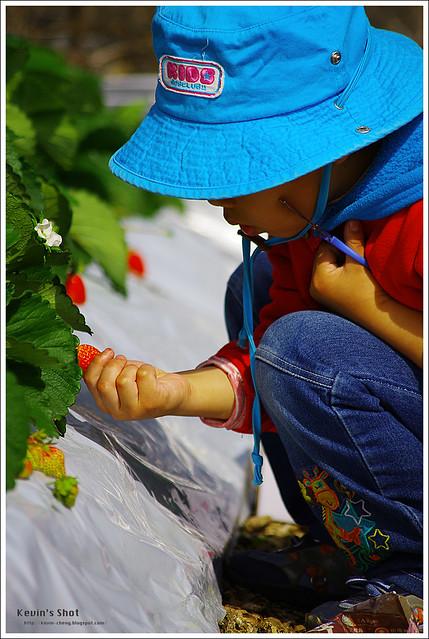 泰昌草莓園
