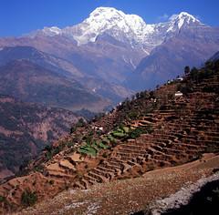 (((((JP))))) Tags: nepal 120 6x6 tlr zeiss fuji planar  80mm rvp100  rolleiflex28e  y ws