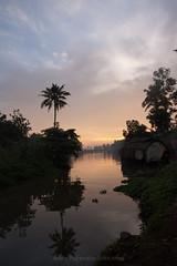 backwaters (Hareesh.P) Tags: india sunrise houseboat backwaters coconuttrees kerela kumarakom wwwhareeshclickscom