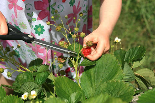 harvest help