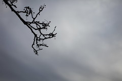 IMG_3661 (bionicteaching) Tags: sky tree clouds branch ds106 ds445
