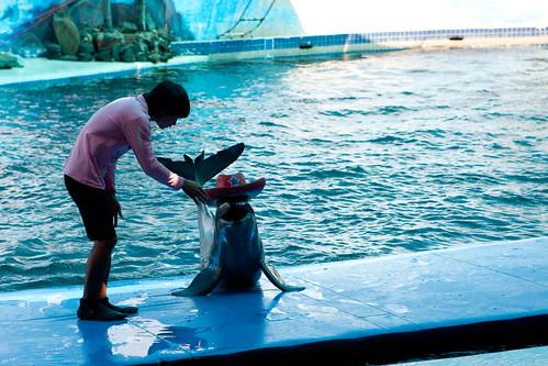 Smile Dolphin Cowboy.