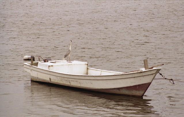 ボートの上の水鳥のフリー写真素材