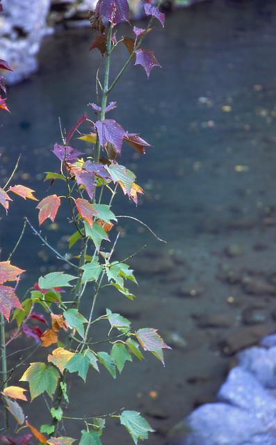 水辺と葉っぱのフリー写真素材