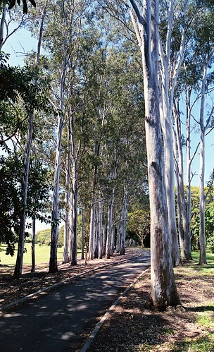Path of the Ghost Gums