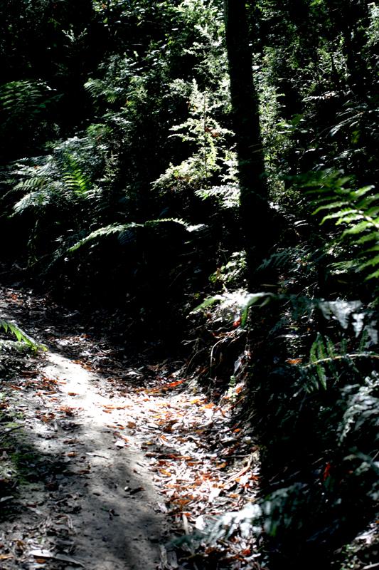 _path