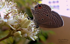 Butterfly Shot With Sony Vivaz (teckhengwang) Tags: flower macro butterfly singapore sony vivaz