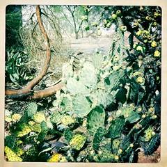 Cactus Heap by Jason Willis