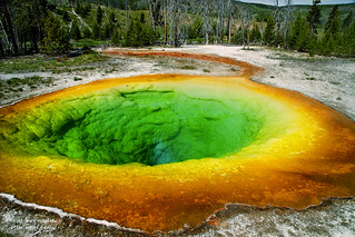 Morning Glory Pool (Upper Basin) at Yellowstone National Park