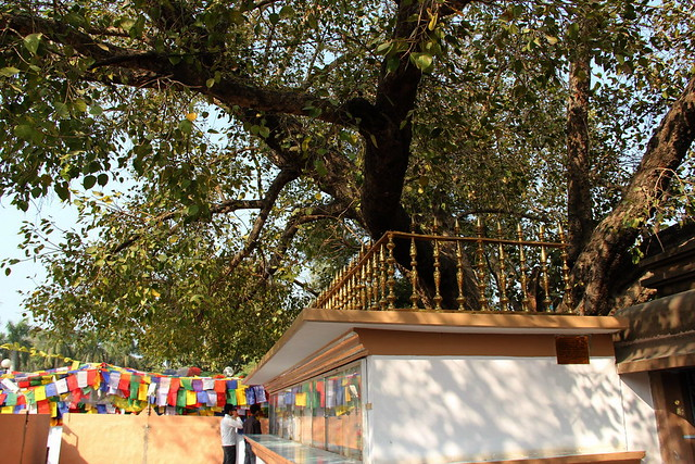 摩犍陀俱提寺(Mulgandha Kuti Vihar)