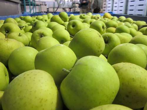 Apple Export at Quneitra Crossing