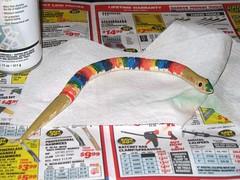 B's Rainbow Snake