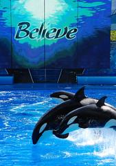 (TonyaAnjean) Tags: believe orca seaworld killerwhale seaworldorlando