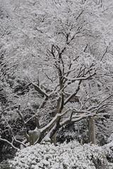 Torii ( - ) (Toshimo1123) Tags: snow shrine nara    shiratori