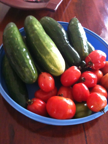 The output of my garden