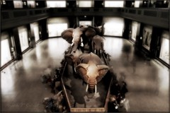Night at the Museum (Ronaldo F Cabuhat) Tags: longexposure travel windows light vacation people holiday newyork art night canon fun photography photo lowlight scenery view watch picture scene adobe elephants picnik matriarch photomatix nightatthemuseum canoneos5dmarkii photoshopcs5