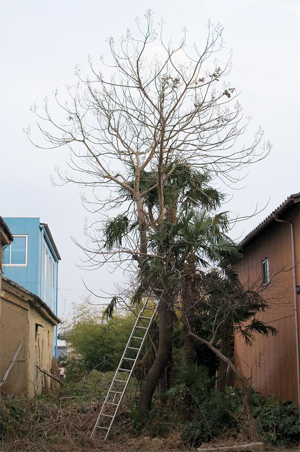木と梯|滋賀県近江八幡市