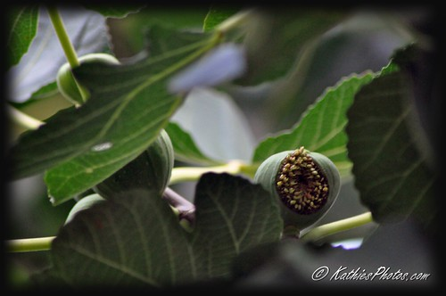 52-365 Split fig