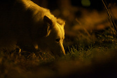 black eyed dog (Timoleon Vieta II) Tags: portrait night cover selftaught cowering hunted blackeyeddog timoleon