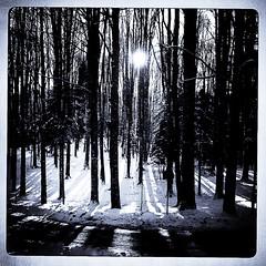 Winter in Cansiglio Highplain (Bobocinema) Tags: wood winter snow neve inverno altopiano bosco iphone baita cansiglio highplain vallorch hipstamatic bobocinema