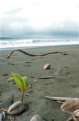 Life is coming, Costa Rica (Matthieu Berroneau) Tags: trip costa beach nature field de landscape minolta coconut wildlife sony playa rica corcovado 350 coco 28 20 alpha paysage rs plage herp vie noix 2011 lebensraum herping herpéto herpeto
