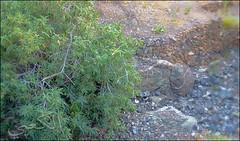 C360_2011-02-23 17-20-24 (MagicPAD - الكعبي) Tags: uae الإمارات الجزيرة الظاهر ناصر الكعبي الخطوة مصح محضة