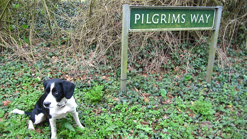 holly-pilgrim