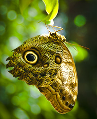 Butterfly (Keith Lovelady's Photography) Tags: butterfly entomology contactgroup freenature freenature100nature
