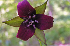 stritz-5042338.jpg (jstritz) Tags: flowers churchville fhsp