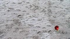 footprints in the sand (Pino Schivo) Tags: monocromo nuvole mare amor liguria rosa arena cielo azzurro spiaggia alassio orma moglio ringexcellence