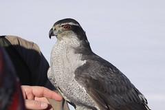 Eagles and Agriculture (L. Kay) Tags: usa nevada genoa