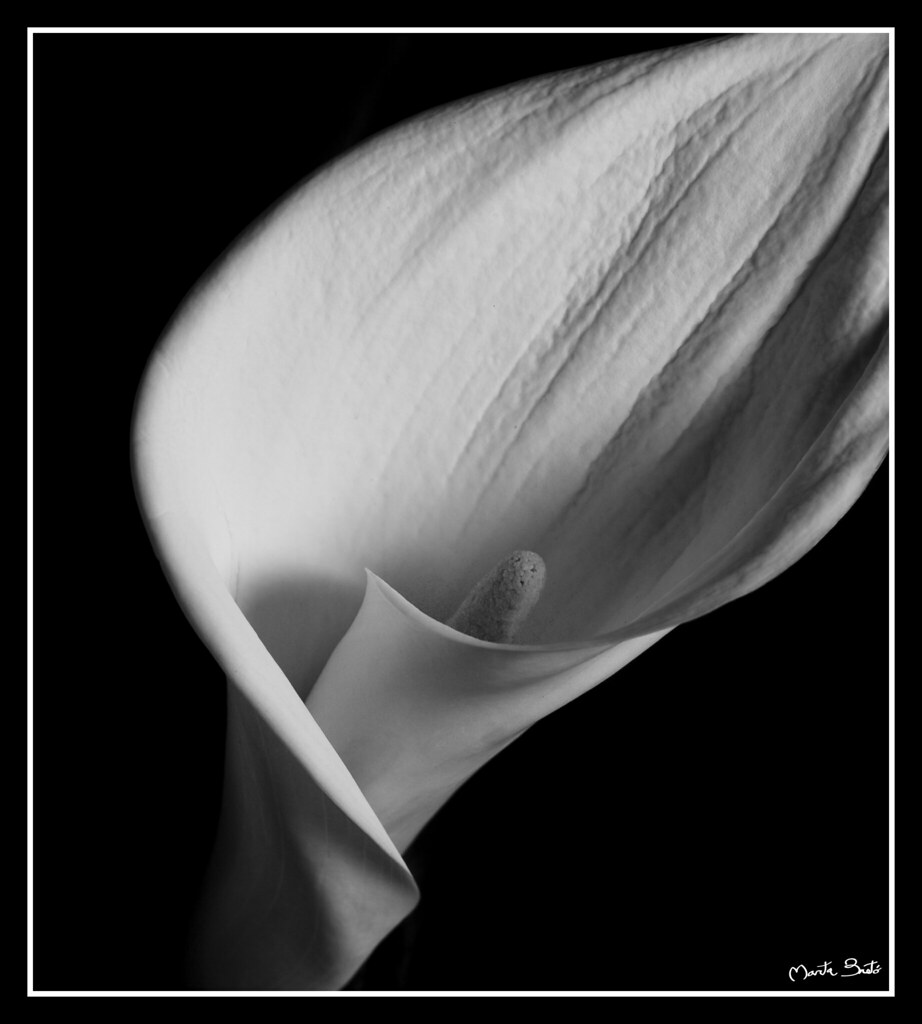 The Worlds Best Photos Of Flower And Imogencunningham Flickr Hive