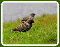 beak feathers worm wildbird