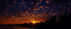 Shore,  City,  Sky! (beachpeepsrus) Tags: sunset clouds color city water shore sky seagull sihlouette sun