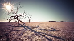 Desolate (Mike Chen aka Full Time Taekwondo Dad) Tags: california longexposure shadow sea usa sun lake tree mike zeiss dead michael long exposure branch desert sony palmsprings salt palm springs threesisters alpha desolate f28 chen saltonsea salton 1635mm a900 redhillmarina sal1635z