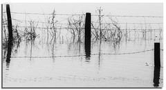 flooded fence (lovestruck.) Tags: winter nature pentax country january views wiltshire floods kennetavoncanal 2011 seend pentaxk10 pentaxart seendcleeve