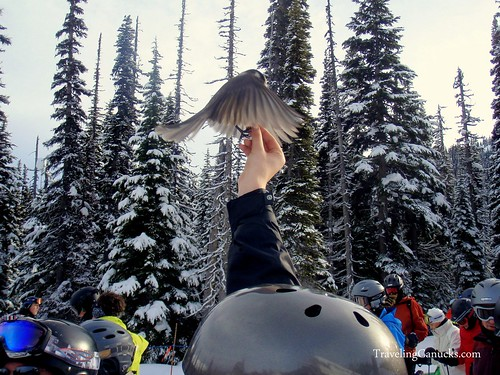 Feeding Whiskey Jack Birds on Whistler Mountain