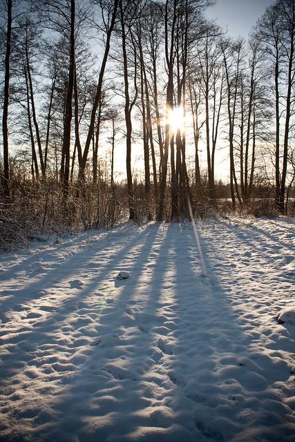 Zima w Bolimowski Prak Krajobrazowy