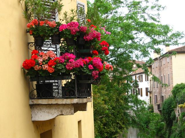 窓辺の花のフリー写真素材