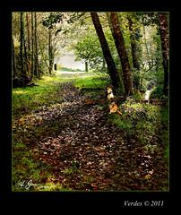 Verdes ( MA.GO (OFF...)) Tags: otoo verdes magophotos2011